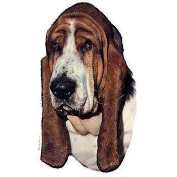 N/A – Klistermærke, basset hund på mypets.dk