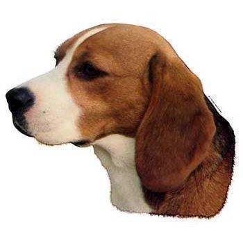 Klistermærke, beagle fra N/A på mypets.dk