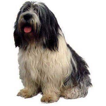 N/A – Klistermærke, polish lowland sheepdog fra mypets.dk
