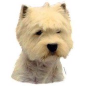 Klistermærke, West Highland White Terrier