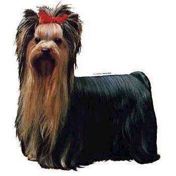 N/A Klistermærke, yorkshire terrier på mypets.dk