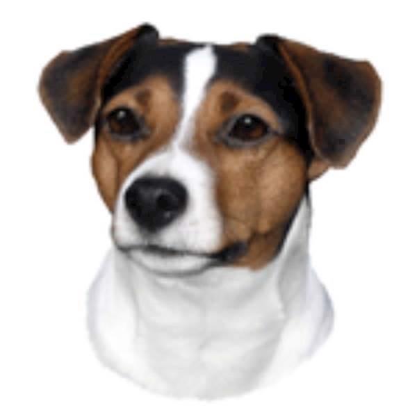 N/A – Klistermærke, dansk svensk gårdhund fra mypets.dk