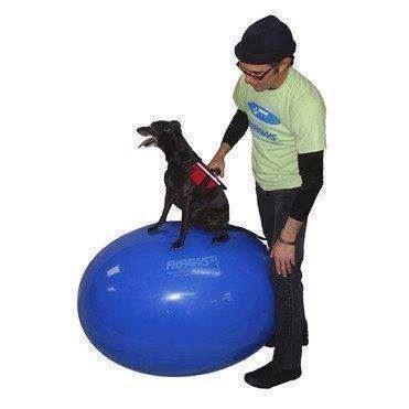 N/A Fitpaws egg ball træningsbold fra mypets.dk