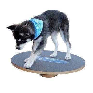 N/A Fitpaws wobble board, 90 cm fra mypets.dk